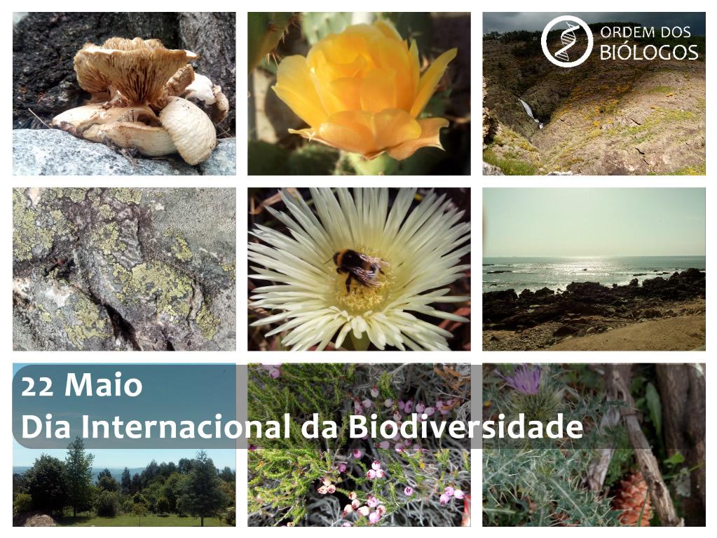 22Maio2017-DiaInternacionalBiodiversidade
