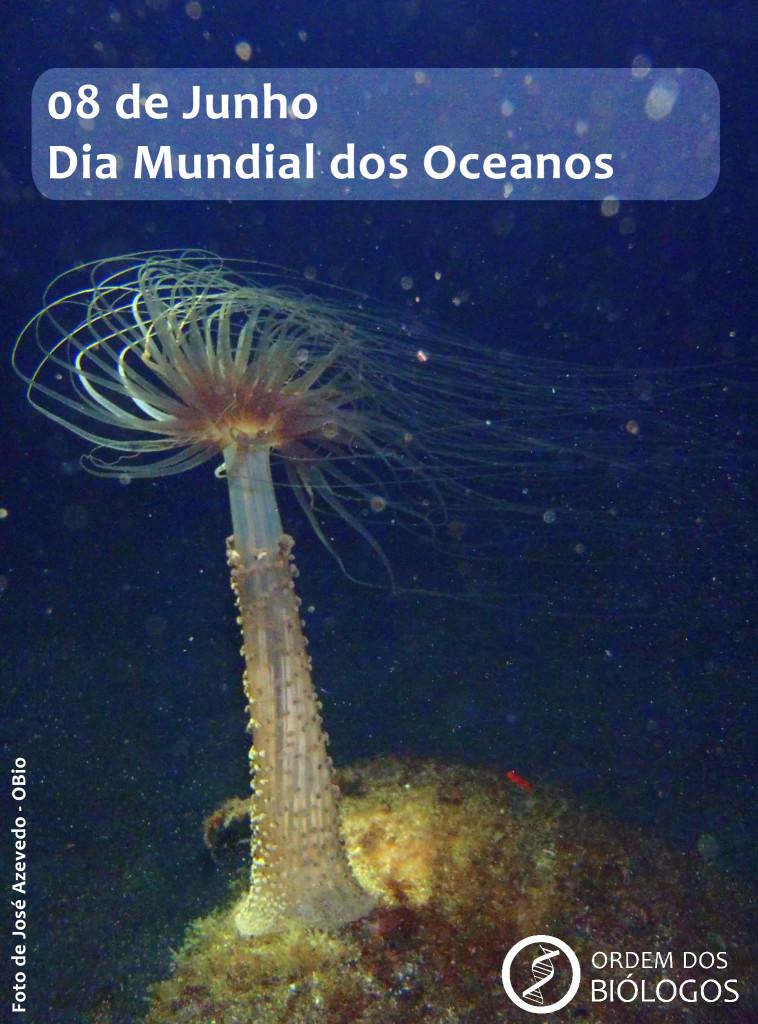 08Junho-Dia Mundial dos Oceanos