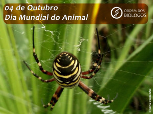 dia mundial do animal 2017