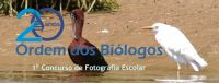 Concurso Fotografia Obio